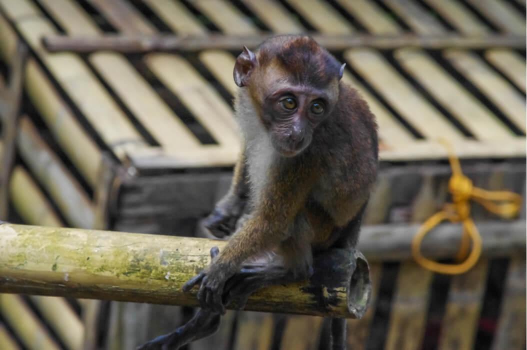 обезьяны в мини-зоопарке