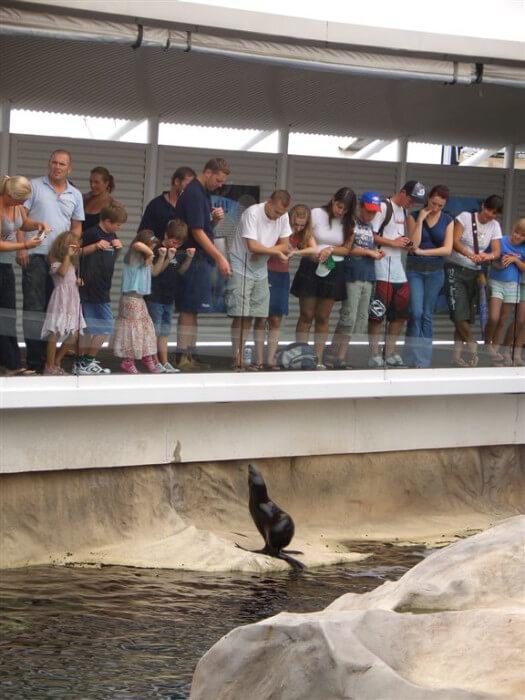 морские котики в аквариуме Сиднея
