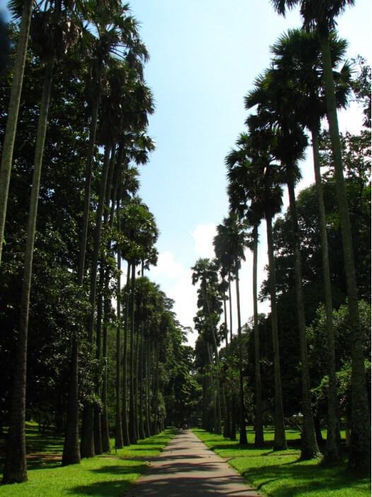 Ботанический сад на Шри-Ланке