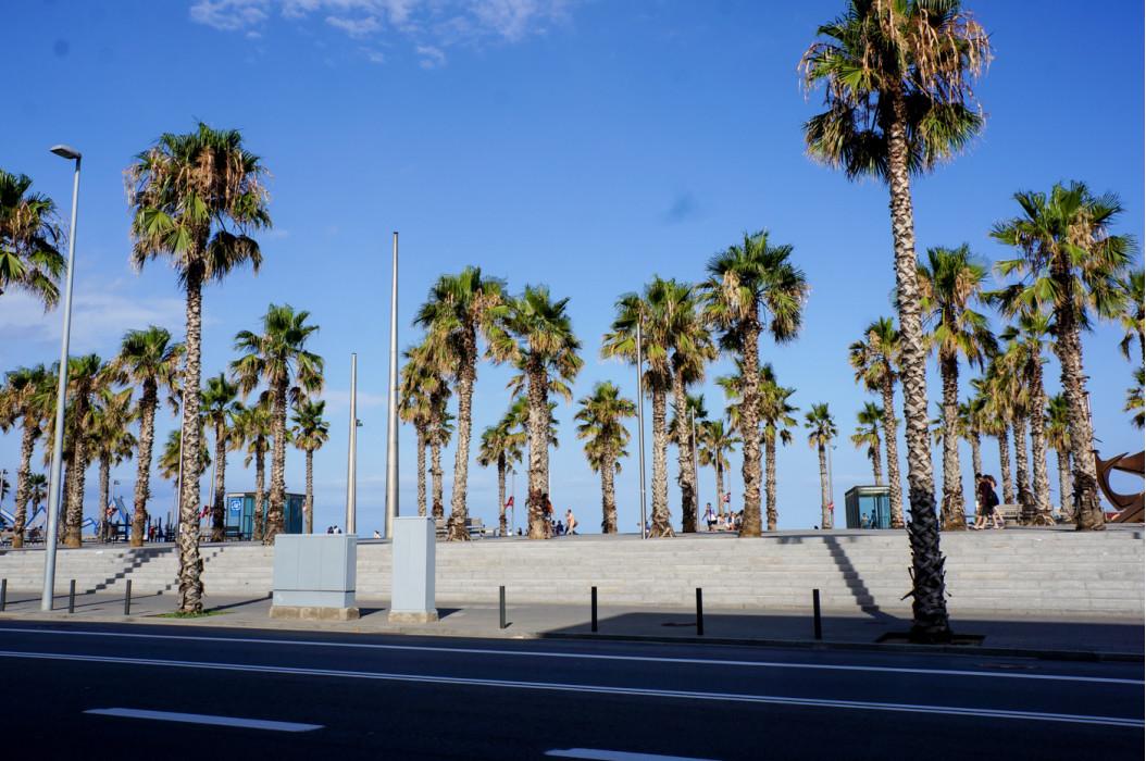 пальмы вдоль дорог в Барселоне