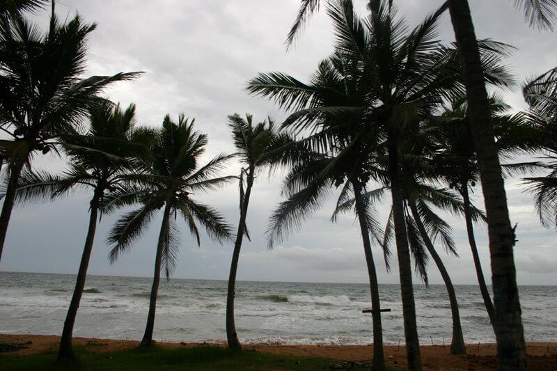 пальмы на Шри-Ланке
