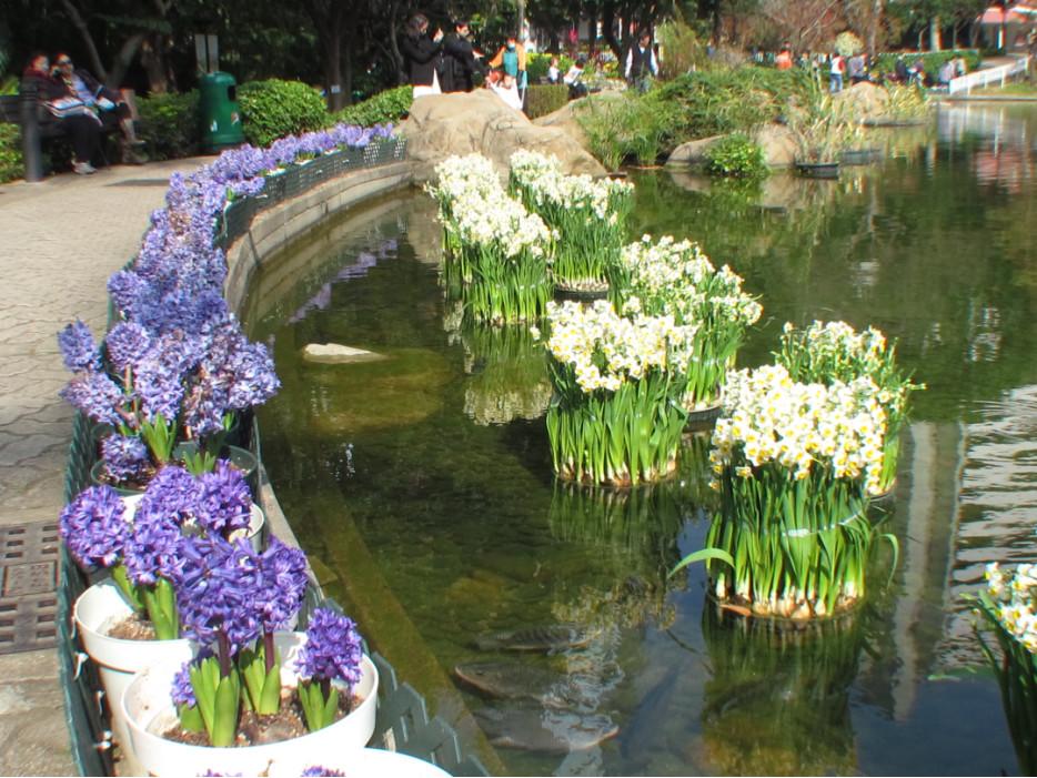 пруд с цветами в парке Гонконга